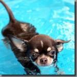 水中ウォーキングで腰痛が改善?歩き方と効果を徹底検証!