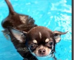 水中ウォーキング 犬 影