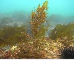 海に生えている海藻