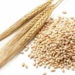 大麦の気になる効果まとめ!小麦との違いや栄養価はどうなってる?
