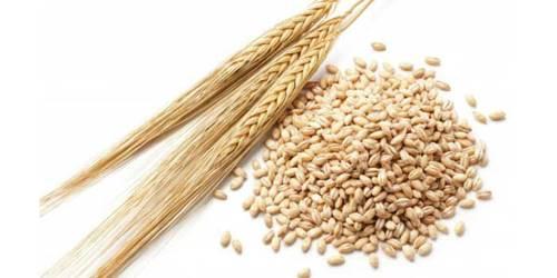 oomugi 大麦の気になる効果まとめ!小麦との違いや栄養価はどうなってる?